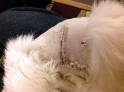 Incision Site Day 4